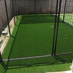 Turf in Dog Run Cage - Five Star Turf Commercial