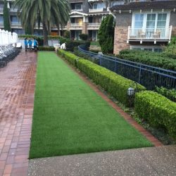 Artificial Grass Near Sidewalk - Five Star Turf Commercial
