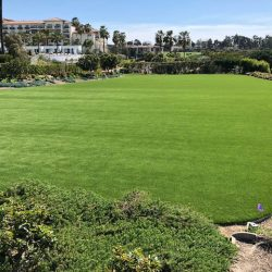 Grass Field After Turf Installation - Five Star Turf Commercial