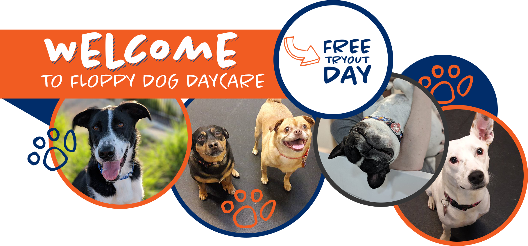Floppy Dog Daycare - Reserve Your Spot At Our Top-Rated
