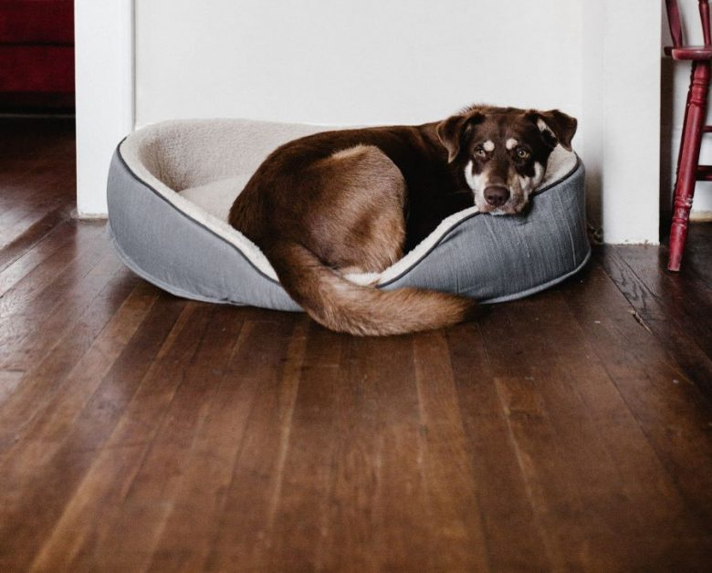 A brown and black dog lazes in a gray bed on hardwood floors. | Photo by Andrew Neel for Unsplash.