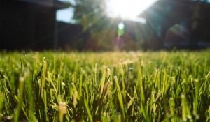 lawn care Olathe