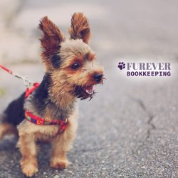 We love dogs at Furever Bookkeeping in Maryland