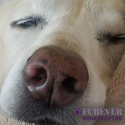 A cute dog's nose from Furever Bookkeeping in Maryland