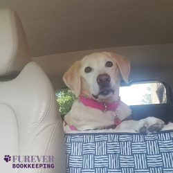 Our dog at Furever Bookkeeping in Maryland
