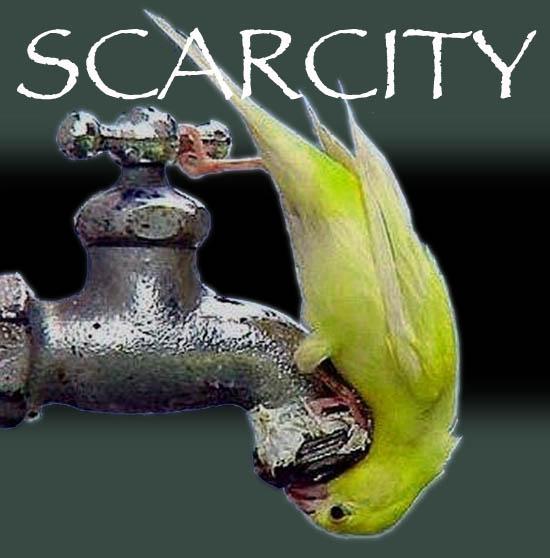 Scarcity-522