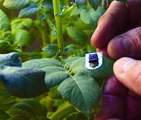 Future Farming 482