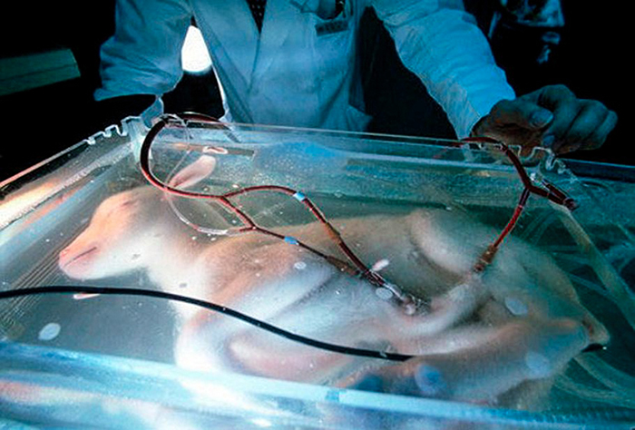 Artificial womb for goat fetuses created by Japanese researchers in mid 1990s