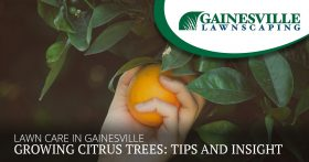 Lawn Care In Gainesville And Growing Citrus Trees Tips And Insight