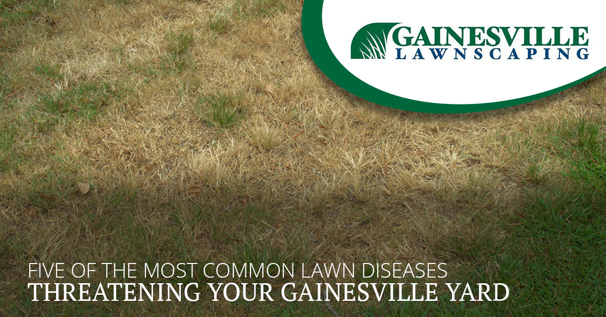 Five Of The Most Common Lawn Diseases Threatening Your Gainesville Yard