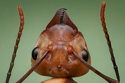 Pest Control - Ant and Spider Experts - Gopher and Termite