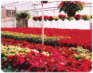 greenhouse2_03