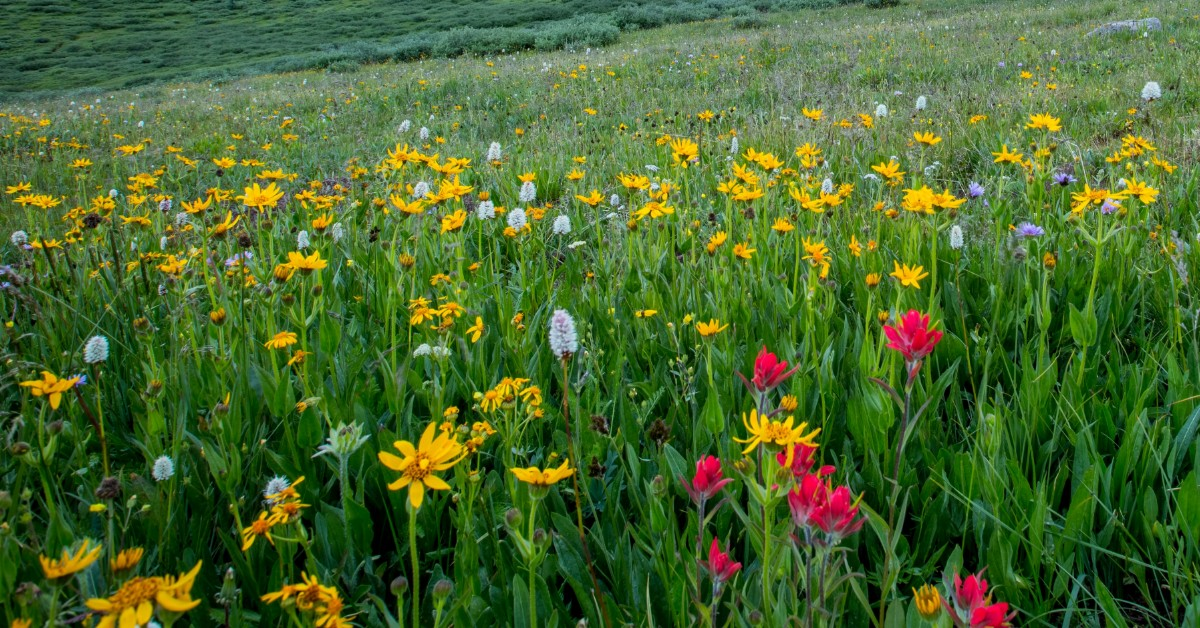 field of long grass with bright wildflowers