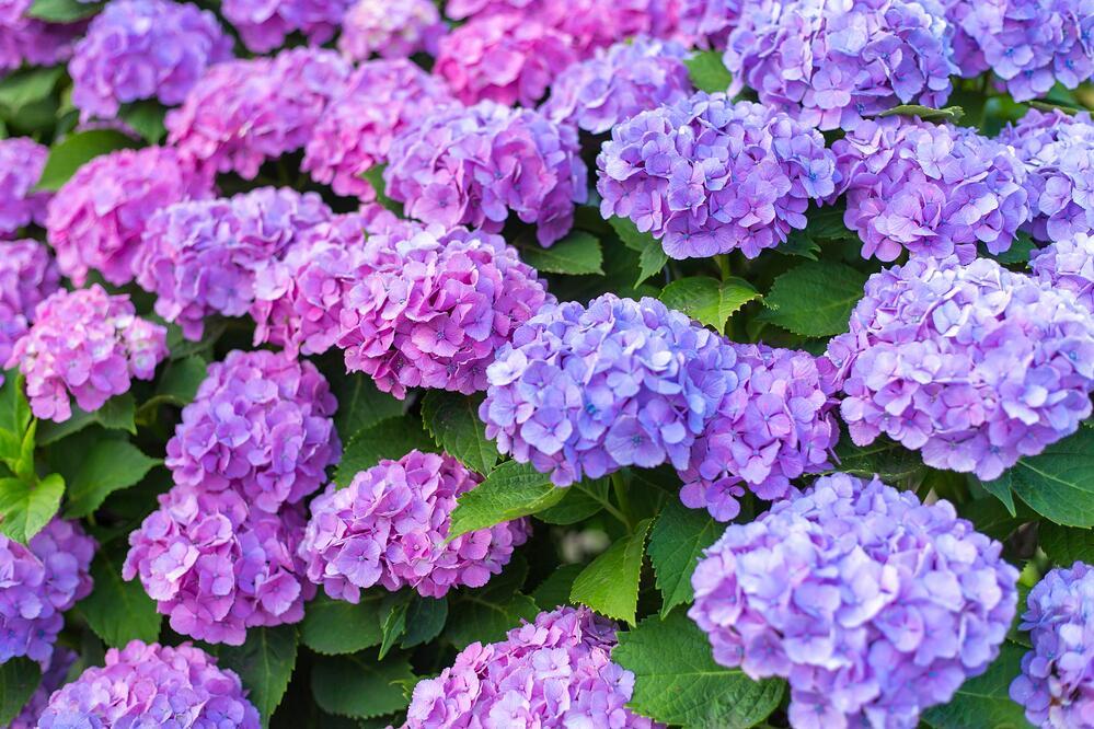 New England Flowers Grow Your Garden Swazy Alexander Landscaping