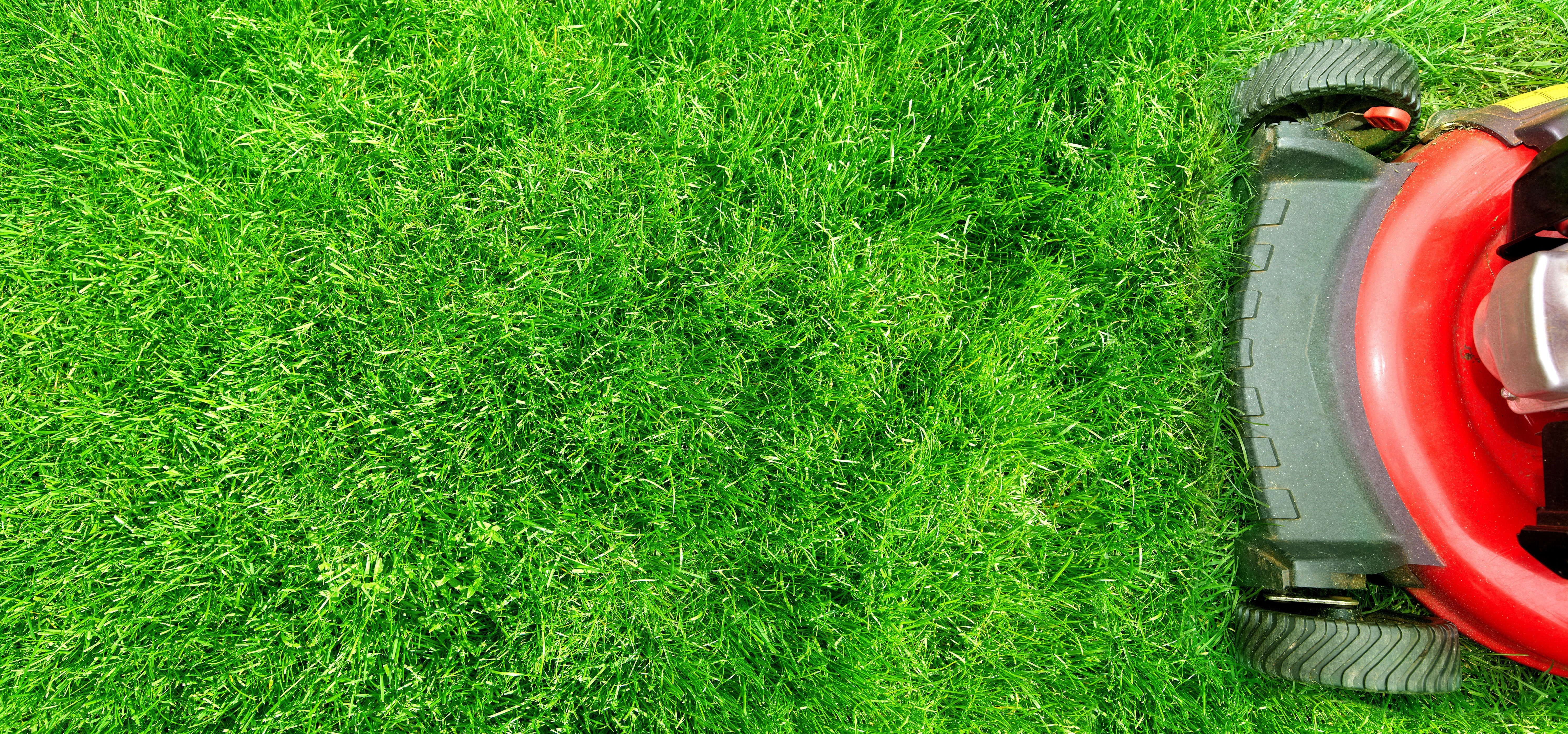 why fertilizer is important for lawn health   green sphere
