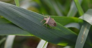bug on plant leaf