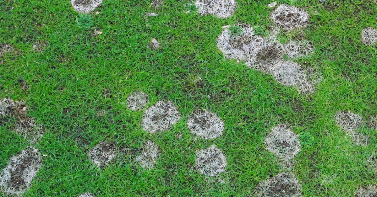 Garden lawn with bare spots after winter