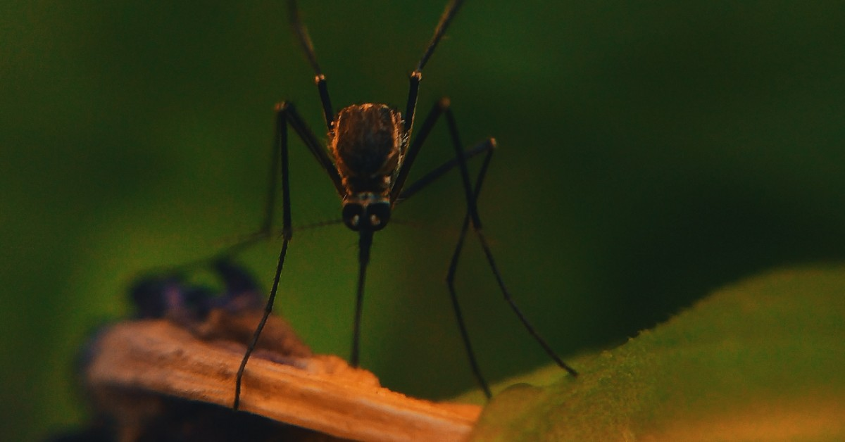 Organic Mosquito Control Rid Your Lawn Of Pests Swazy