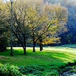 Trees CTA Image