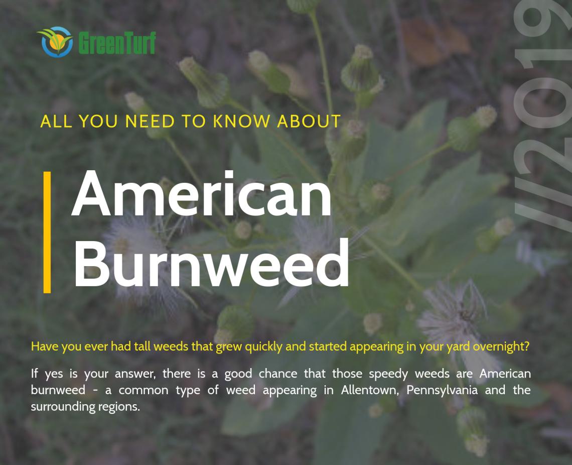 american burnweed control pennsylvania
