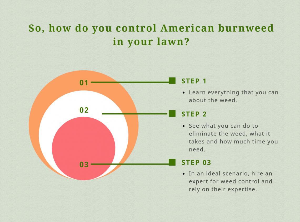 american burnweed get rid of