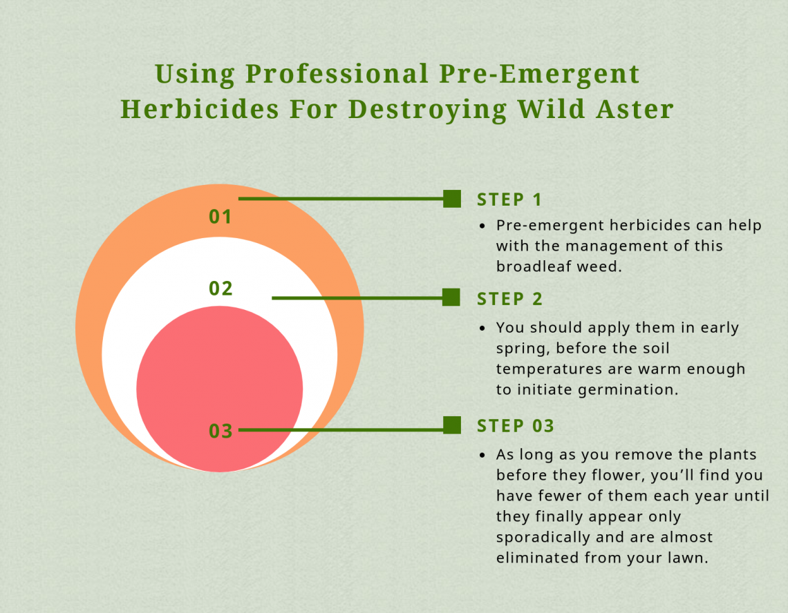 herbicides for wild aster
