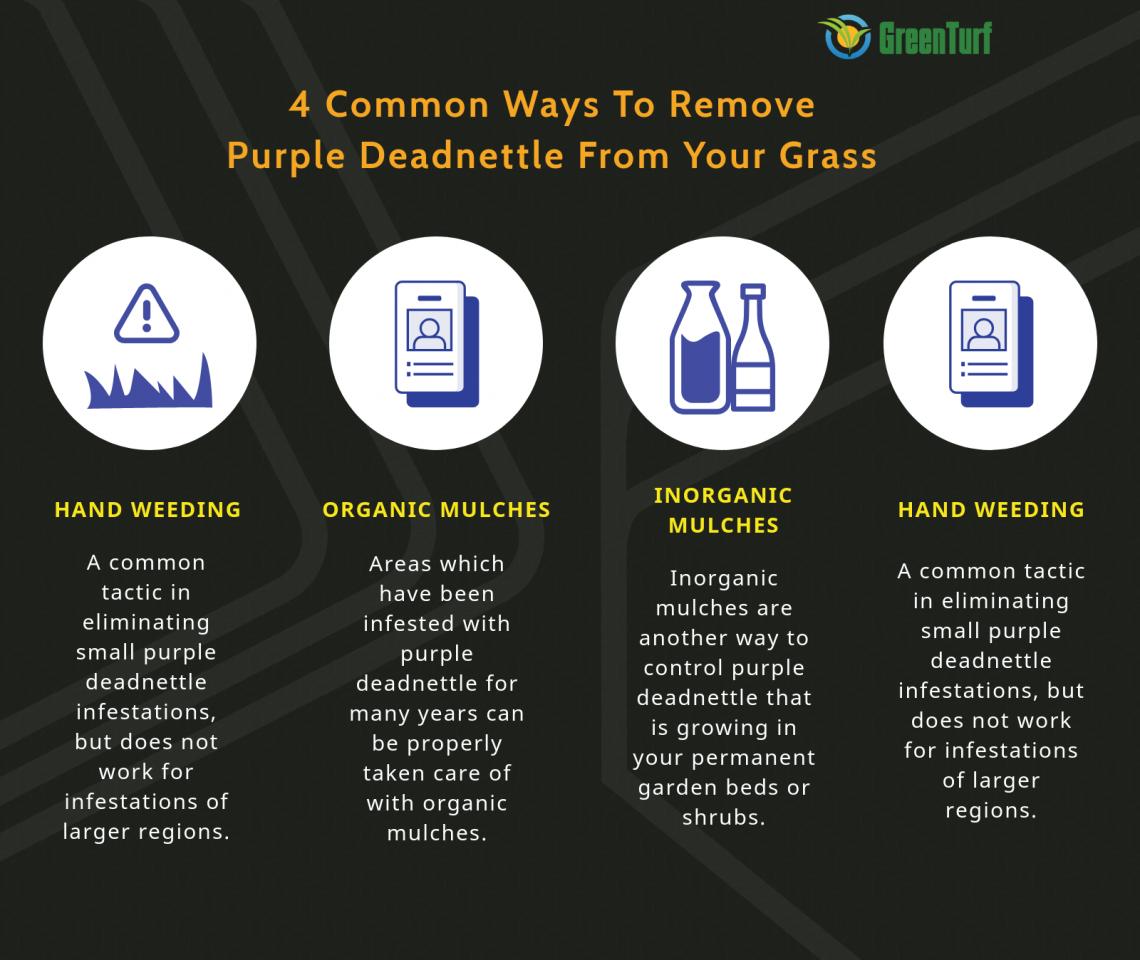 ways to eliminate deadnettle