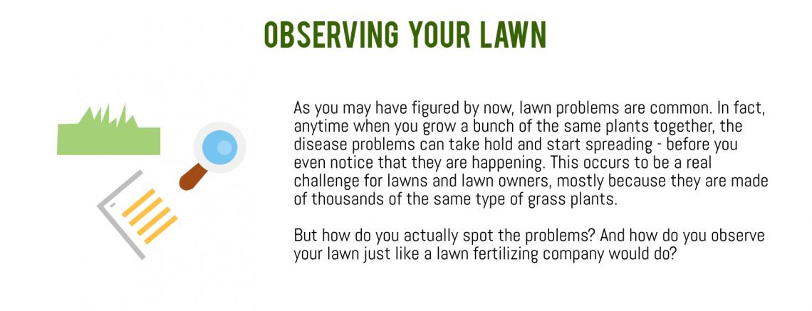 lawn observation