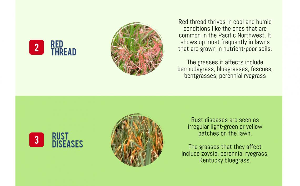 lawn disease checklist