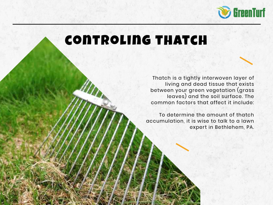 controlling thatch