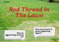 red thread in the lawn