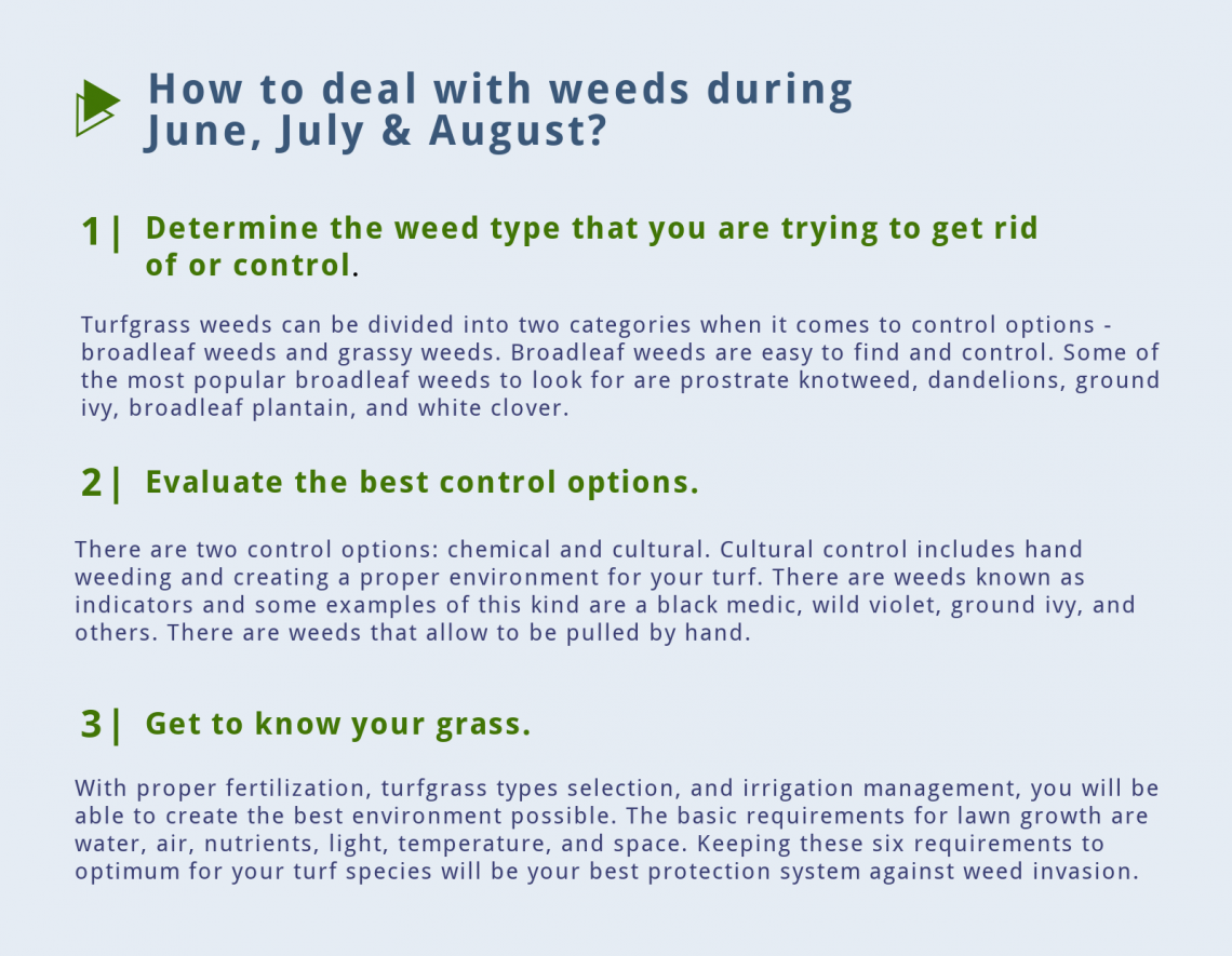 weeds summer lawn care