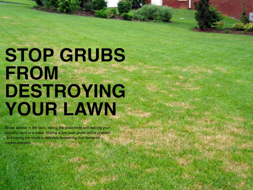 stop grubs