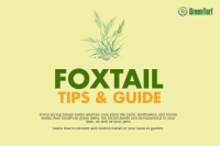 foxtail weed control