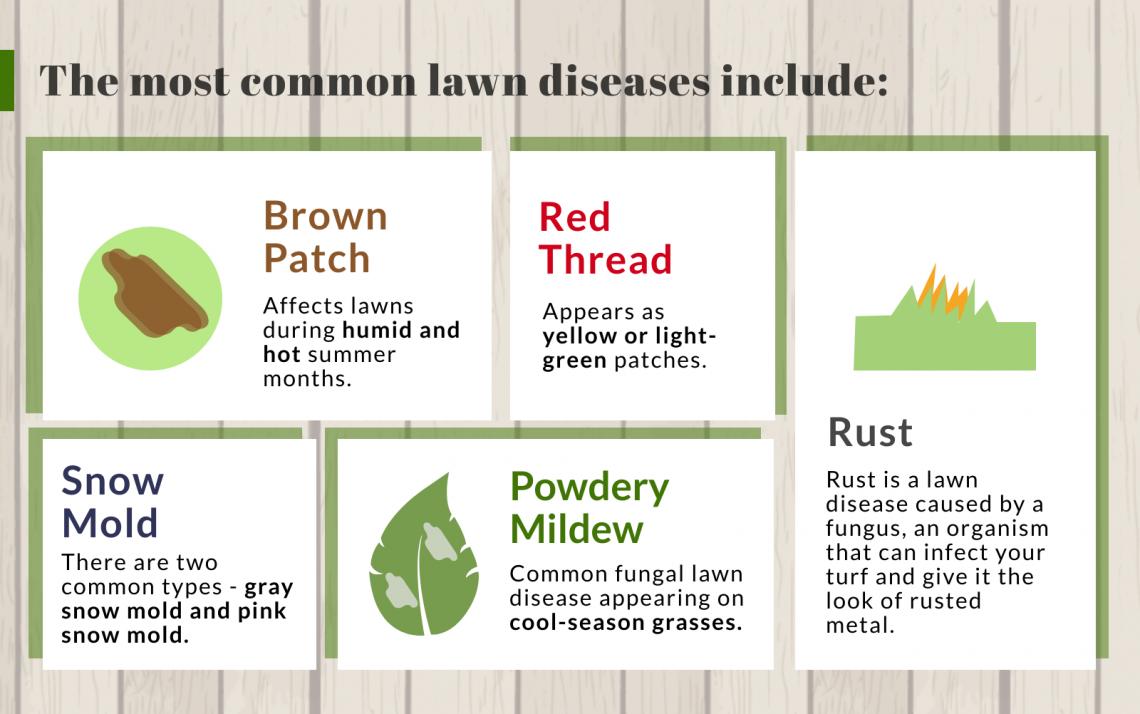 common lawn diseases list