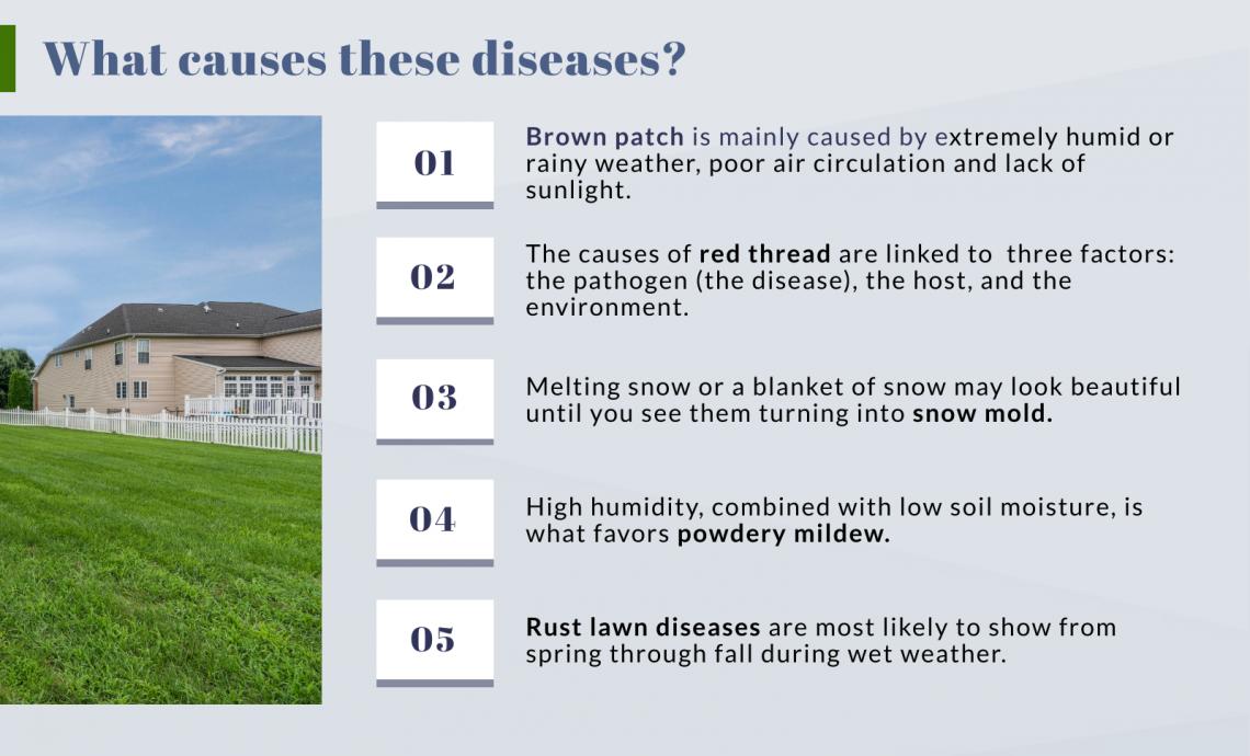 causes lawn diseases
