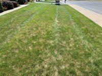 leaf spot disease in lawn