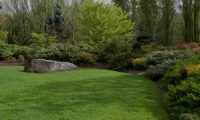 why four lawn care programs