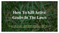 how to kill active grubs in your lawn