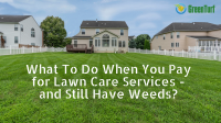 get rid of weeds lawn service
