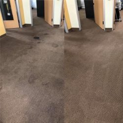 Office Carpet Before and After Deep Cleaning