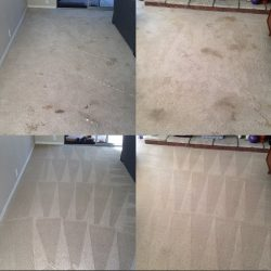 Carpet Before and After Steam Cleaning