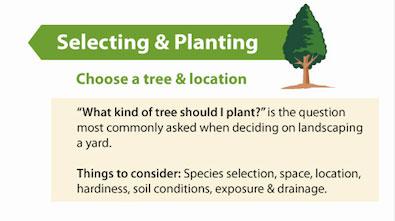 selectingplanting