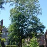 HOA-tree-150x150