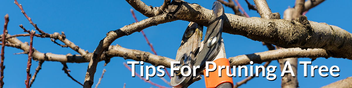 pruning-top-banner-021517