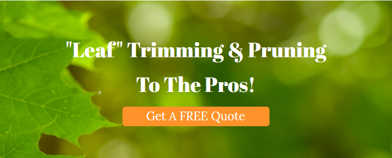 Get Tree Info From Certified Arborists in Ashburn