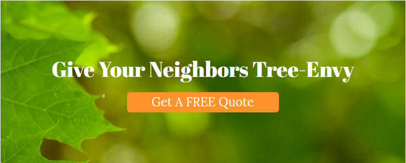 Growing Earth Tree Care & Maintenance Ashburn