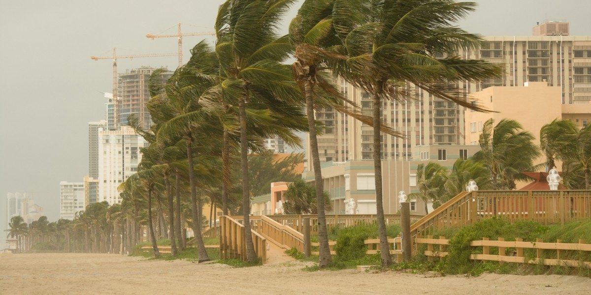 A windy beach.