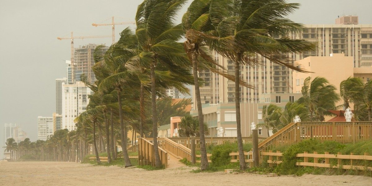 An image of a beach lined with palm trees experiencing heavy winds.