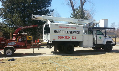 Tree Service Shelby Township